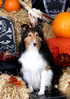 Howl-O-Ween Fest, Classic K9 Event